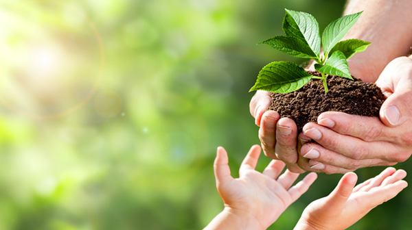 Child's hands reaching for seedling held in parent's hands